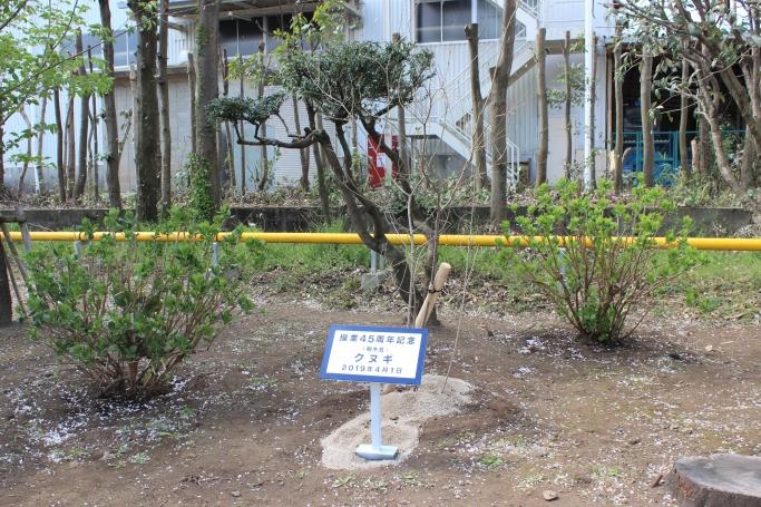記念樹(クヌギの木)
